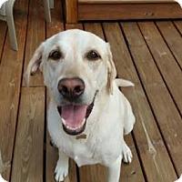 Adopt A Pet :: Duke - Lockport, NY