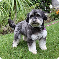 Adopt A Pet :: BRIAR - Newport Beach, CA