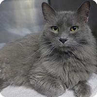 Adopt A Pet :: C-70008  Grayson - Westampton, NJ