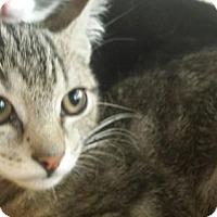 Adopt A Pet :: ROSE - Smithtown, NY