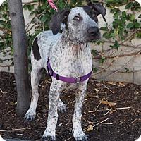 Adopt A Pet :: Sega - Corona, CA