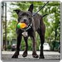 Adopt A Pet :: Faith - Freeport, NY