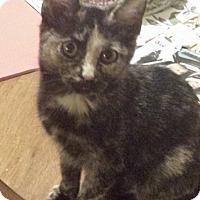 Adopt A Pet :: Reese - Columbus, OH
