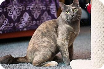 Domestic Mediumhair Cat for adoption in Santa Ana, California - Eudora (sweet & gentle)