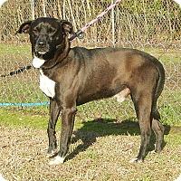 Adopt A Pet :: Sky - Newport, NC