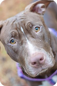 Terrier (Unknown Type, Medium) Mix Dog for adoption in Greensboro, North Carolina - VEGA