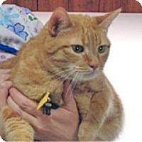 Adopt A Pet :: Anani - Wildomar, CA