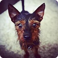 Adopt A Pet :: Terra - Santa Fe, TX