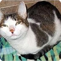 Adopt A Pet :: Gabby - Alexandria, VA