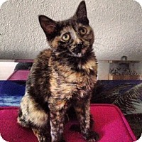 Adopt A Pet :: Zooey - Sunrise, FL