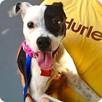 Adopt A Pet :: Penny Lane in Houston - Houston, TX