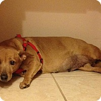 Adopt A Pet :: Petunia - Royal Palm Beach, FL