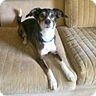 Adopt A Pet :: Sizzles