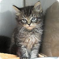 Adopt A Pet :: Houdini - Athens, GA