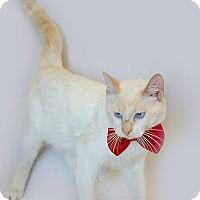 Adopt A Pet :: Sven - Schererville, IN