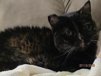 Domestic Mediumhair Cat for adoption in Council Bluffs, Iowa - 2050 Mama - DF