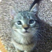 Adopt A Pet :: Mr. Smith - Mission Viejo, CA