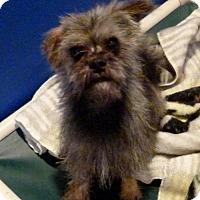Adopt A Pet :: Clyde - Diamondville, WY