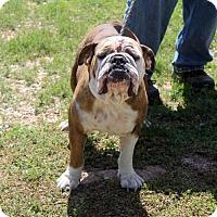 Adopt A Pet :: Zelda - Waco, TX