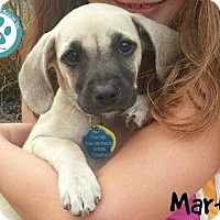 Adopt A Pet :: Martin - Kimberton, PA