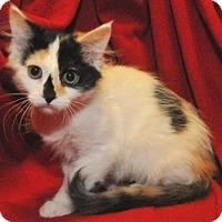 Adopt A Pet :: Chelsea - Garland, TX