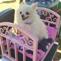 Adopt A Pet :: Betty - Bellingham, WA