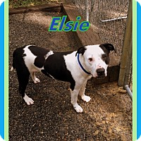 Adopt A Pet :: Elsie - Berkeley Springs, WV