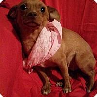 Adopt A Pet :: Mindy - Hamilton, ON