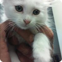 Adopt A Pet :: Cesil - Franklin, NH