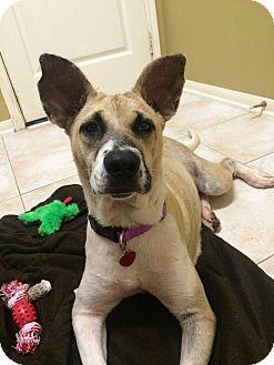 German Shepherd Dog Mix Dog for adoption in Austin, Texas - Libby