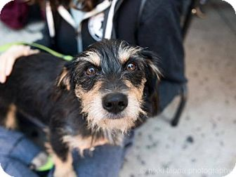Terrier (Unknown Type, Medium) Mix Dog for adoption in Brooklyn, New York - George Peppard