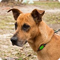 Adopt A Pet :: Mykayla - Daleville, AL