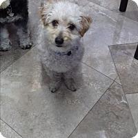 Adopt A Pet :: Elvis - San Diego, CA