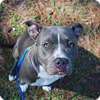 Adopt A Pet :: Argo - Gainesville, FL
