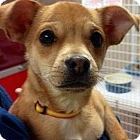 Adopt A Pet :: Tico - Green Bay, WI