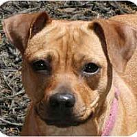 Adopt A Pet :: Julep - kennebunkport, ME