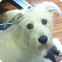 Adopt A Pet :: Marley - Brattleboro, VT