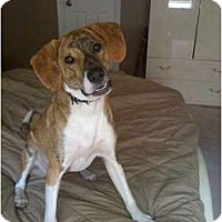 Adopt A Pet :: Dallas - Orange Park, FL