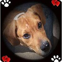 Adopt A Pet :: Jethro - Cincinnati, OH
