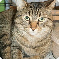 Adopt A Pet :: Princess - Leamington, ON