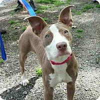 Adopt A Pet :: Eloise - nashville, TN
