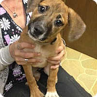 Adopt A Pet :: Jelly Bean - Hagerstown, MD
