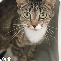 Adopt A Pet :: Glitter - Merrifield, VA
