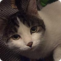 Adopt A Pet :: ELTON JOHN - FURRY BUDDY - New York, NY