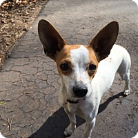 Adopt A Pet :: Maggie in CT - Manchester, CT
