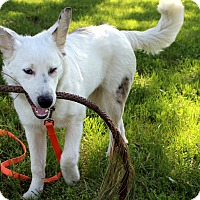Adopt A Pet :: Linus - Deaf & Sight Impaired - Post Falls, ID