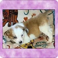 Adopt A Pet :: Carmen - Genoa City, WI