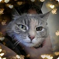 Adopt A Pet :: Wildflower - Trevose, PA