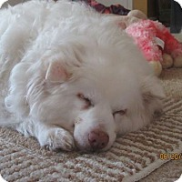 Adopt A Pet :: Klondike of Ohio - Lindsey, OH