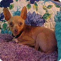 Adopt A Pet :: Hector - 8 lbs - Dahlgren, VA